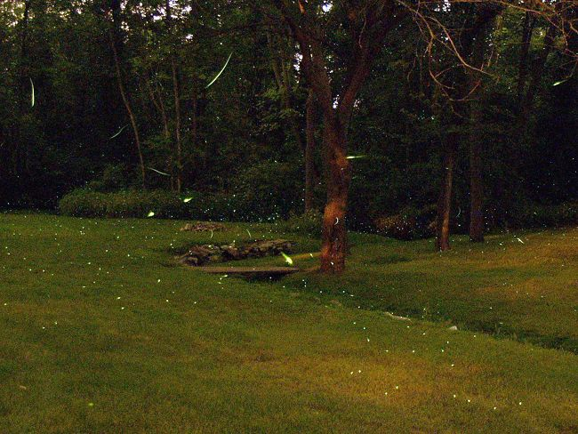 Where Have All The Lightning Bugs Gone? (1/2)