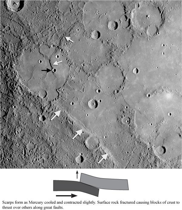 Mercury scarps and wrinkle ridges