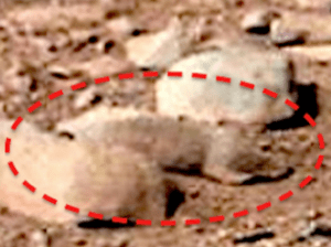 Weird Creatures Spotted On Mars?