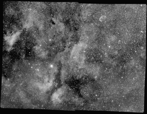 Red channel of Steve Milne's multi-channel mosaic of the Sadr region in the constellation Cygnus. Corrected with LNC & MBB.