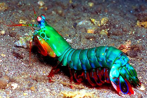A tamarutaca possui incríveis 12 diferentes cones.