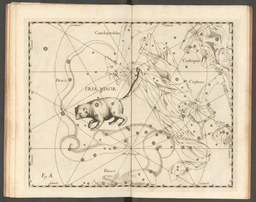 A constelação da Ursa Menor (Ursa Minor) parece ter sido uma aquisição recente. Johannes Hevelius, Uranographia, 1690.