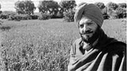 Baisakhi in 2016 will also be celebrated as harvest festival, especially by Hindus and Jains.