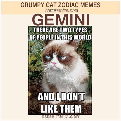 Gemini Meme - Grumpy Cat