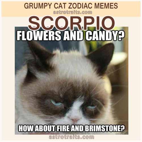 Scorpio Meme - Grumpy Cat