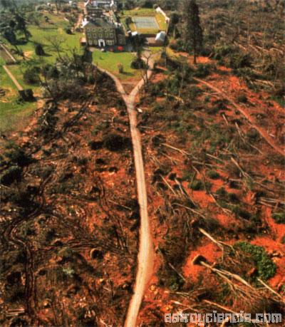 bosque devastado tras un huracán