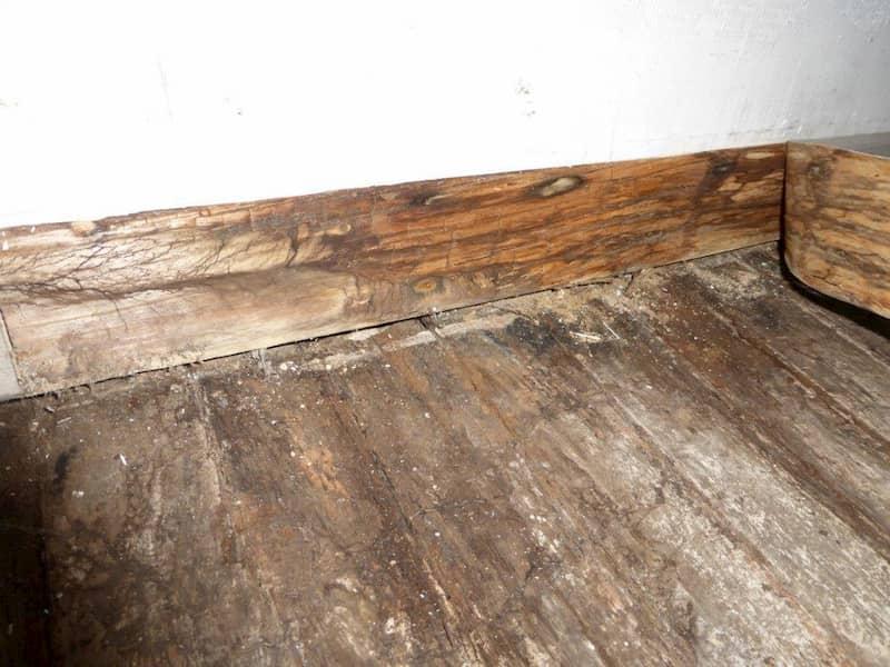 plinthes et plancher touchés par le mérule