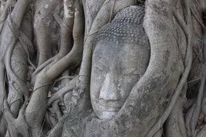 Buddha head in Wat Mahatat, Ayutthaya