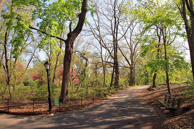 Top 10 things to see in central park new york city for Best places to go in central park