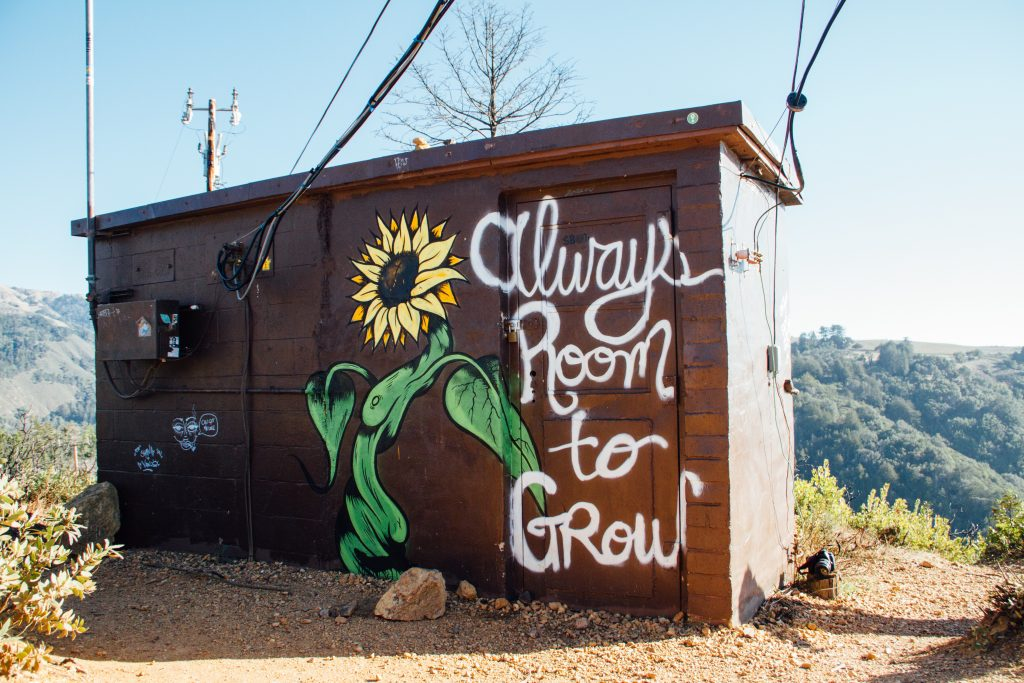 """Image showing graffiti of a sunflower captioned """"always room to grow"""""""