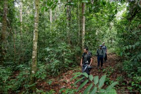 Jungle hike with Chien Lee and Frank Pichardo at Deramakot Forest Reserve