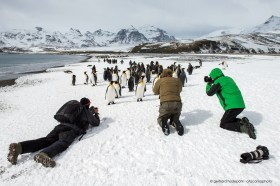 Photographers in close encounter with king penguins, South Georgia Island