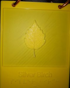3 D Print of Silver Birch Leaf