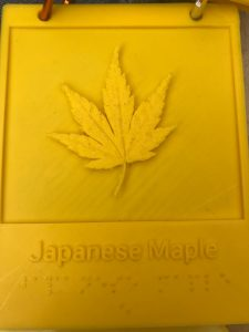 Tactile Japanese Maple Leaf