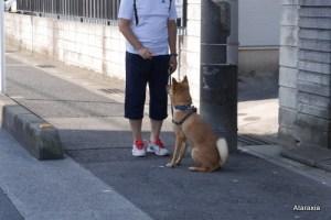 Ataraxia_dogtraining_A (1)