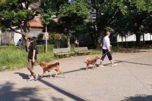 Ataraxia_dogtraining_A (5)
