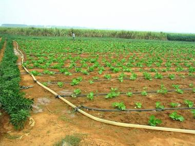 Water Scarcity - Drip Irrigation