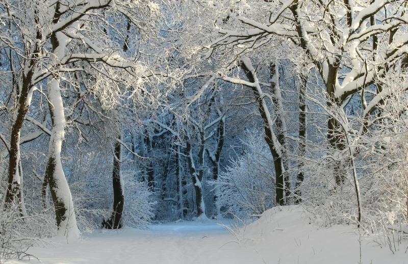 The Big Wood – Good Heavens, it is Cold!