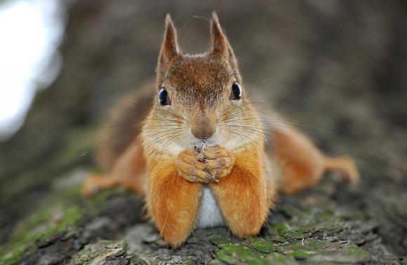 Squirrel Appreciation Day – Go Nuts!