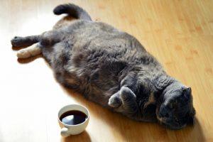 cat-1351612_1920 (800x532)