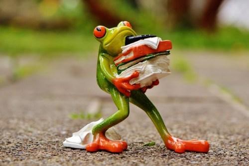 frog-1339916_1920 (800x532)