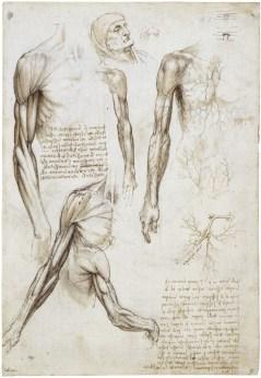 Leonardo A_Dead_or_Moribund_Man_in_Bust_Length