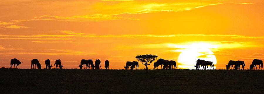 Bush Beach Safari - Tanzania