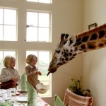 Family Safari - Atelier Africa - Giraffe Manor
