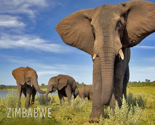 Zimbabwe Luxury Safari