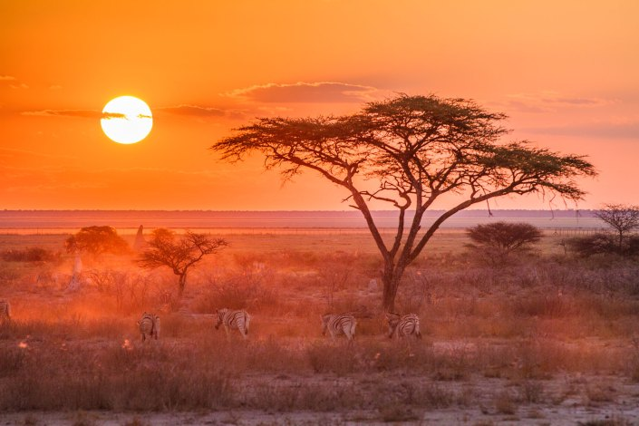 Onguma The Fort Sunset Etosha Zebra