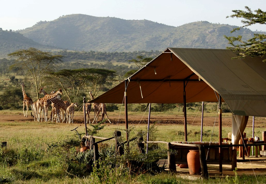 Enasoit_private_camp_giraffes_kenya