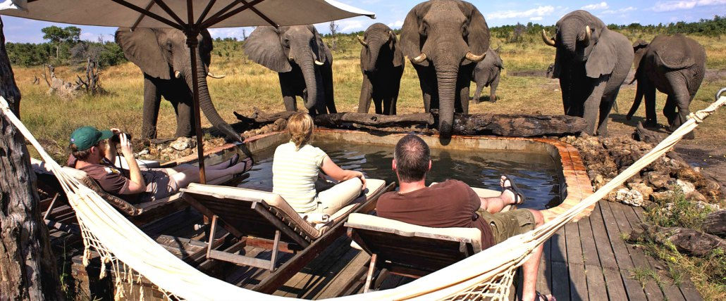Zimbabwe Elephants by the pool Hwange