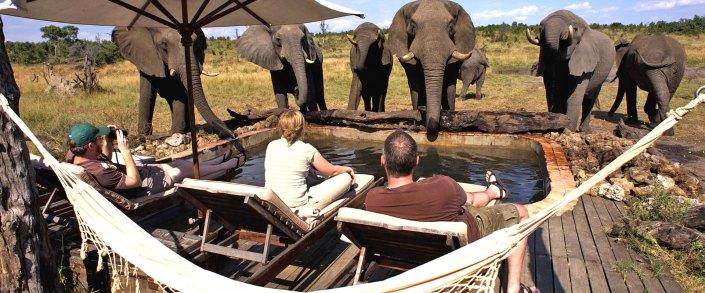 Zimbabwe Elephants by the pool Hwange