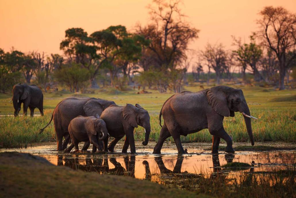Travel Botswana Luxury Safari