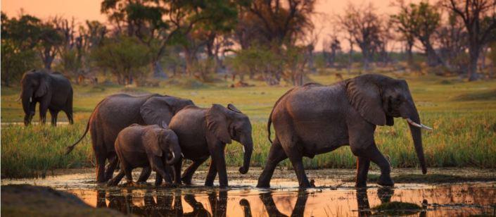 Botswana Reisverhaal