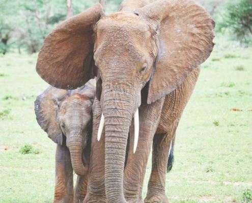 Mother elephant with her calf