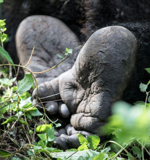 voetjes zilverrug