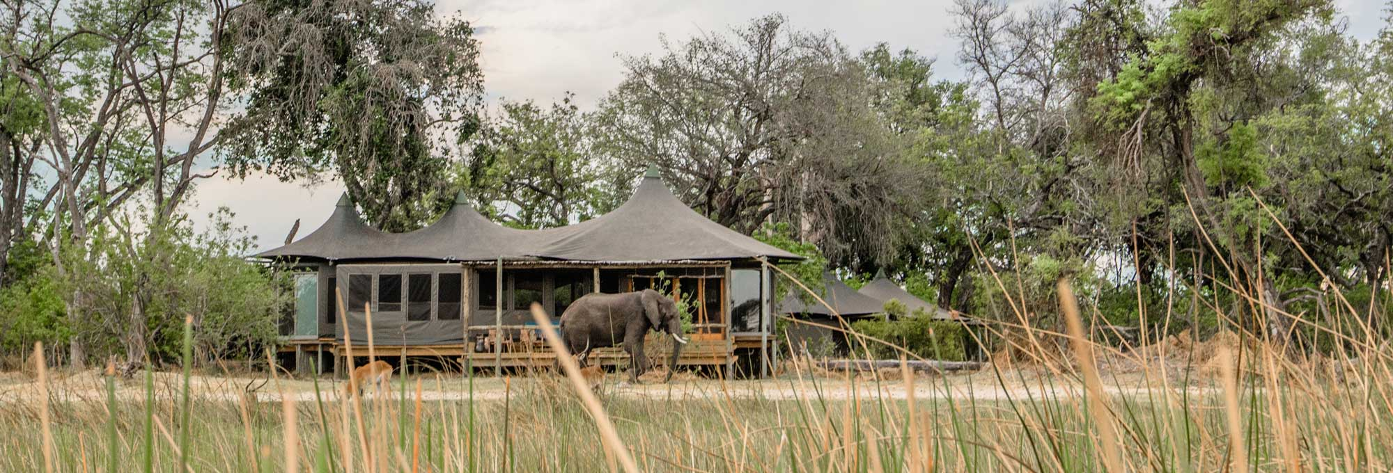Little Vumbura Camp - Botswana - Atelier Africa