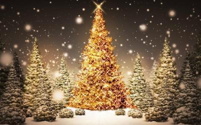 Pour un Noël chic ou de gala !