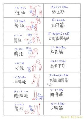 タッチフォーヘルス筋肉レベル1