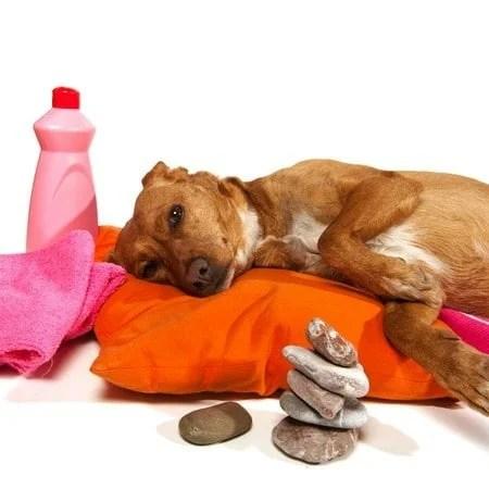 Les-cures-de-bien-être-pour-votre-animal-les-traitements-thalasso