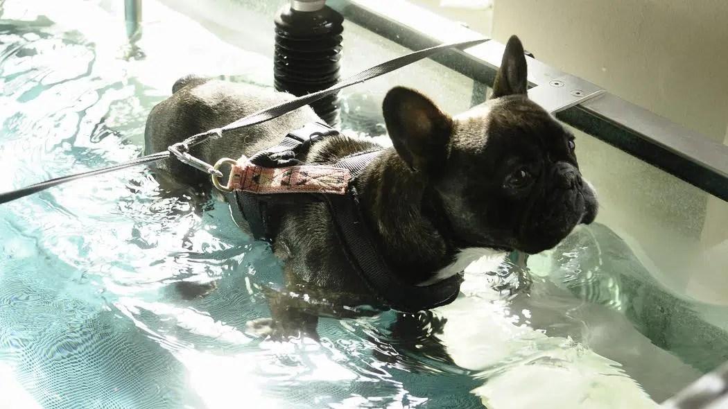 Thalasso pour chien