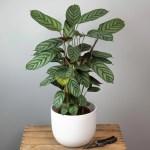 plante-verte-surprise-55€-atelier-lavarenne-fleuriste-lyon-3
