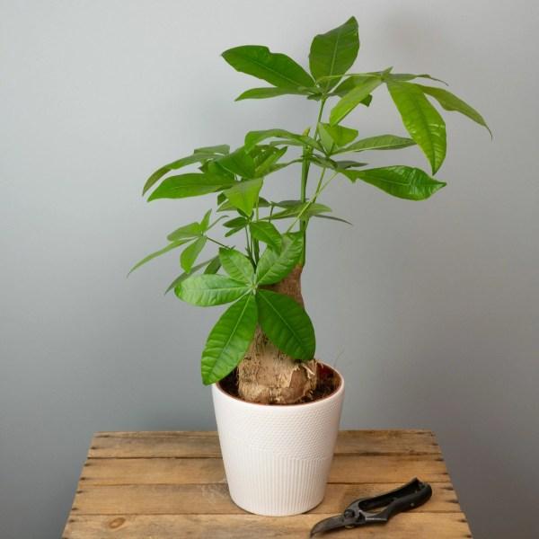 plante-verte-surprise-65-euros-atelier-lavarenne-fleuriste-lyon-3