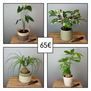 plante-verte-surprise-65-euros-atelier-lavarenne-fleuriste-lyon