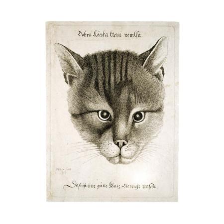 Václav Hollar - Dobrá kočka, ktrerá nemlsá