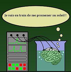 250px-cerveau_dans_une_cuve