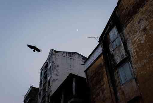 verfallene Häuser, Greifvogel, Vogel,