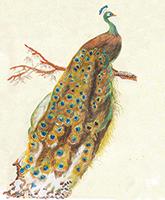 Aqua Chalcedoon