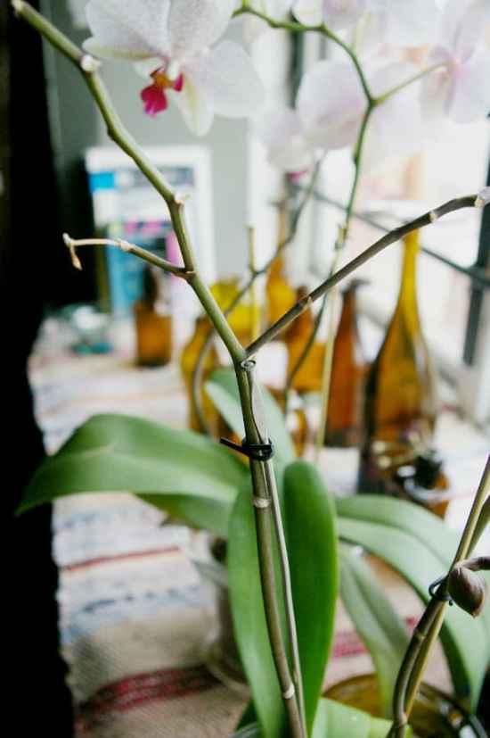Enklaste återbruket någonsin! Använd stickor till dina orkidéstänglar